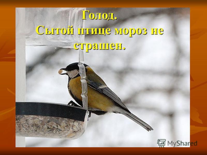 Голод. Сытой птице мороз не страшен.