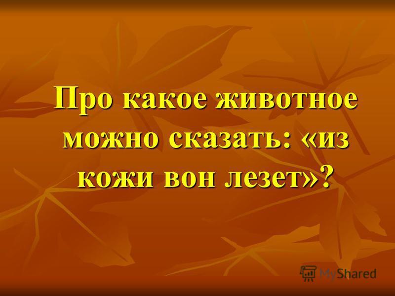 Про какое животное можно сказать: «из кожи вон лезет»?