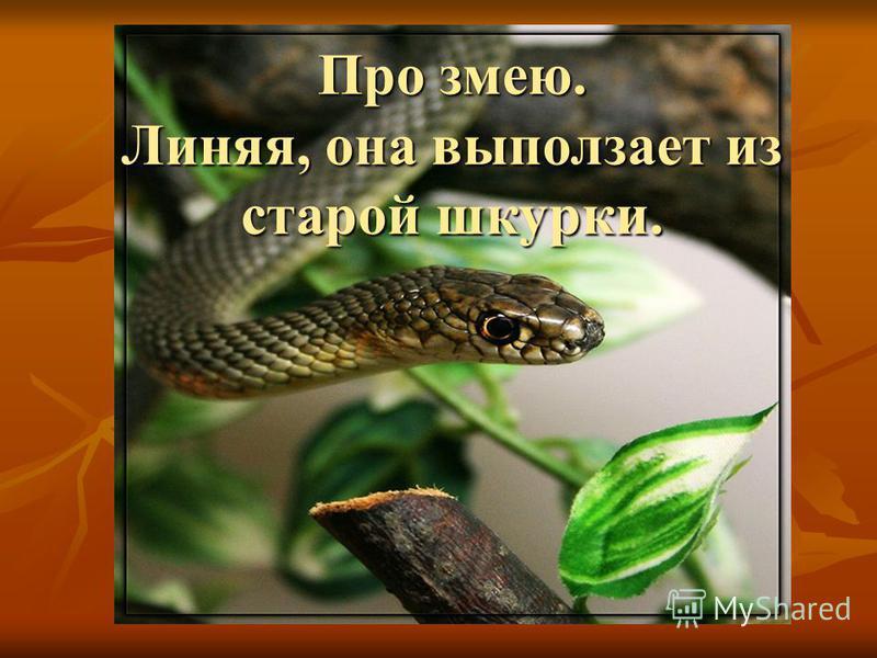 Про змею. Линяя, она выползает из старой шкурки.