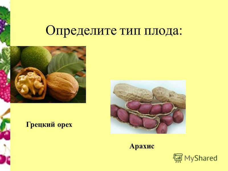 Определите тип плода: Грецкий орех Арахис