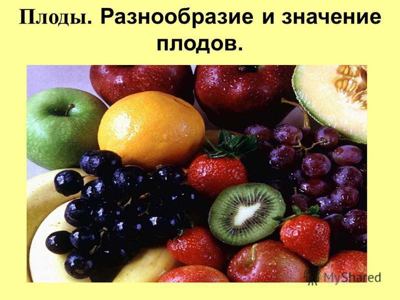 Плоды. Разнообразие и значение плодов.