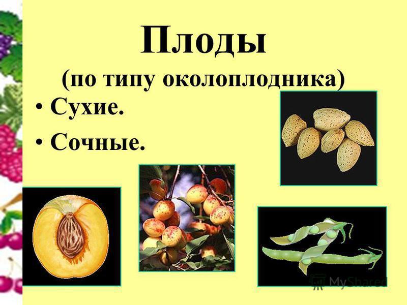 Плоды (по типу околоплодника) Сухие. Сочные.