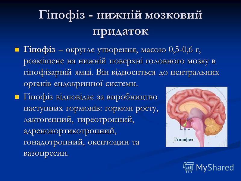 Гіпофіз - нижній мозковий придаток Гіпофіз – округле утворення, масою 0,5-0,6 г, розміщене на нижній поверхні головного мозку в гіпофізарній ямці. Він відноситься до центральних органів ендокринної системи. Гіпофіз – округле утворення, масою 0,5-0,6