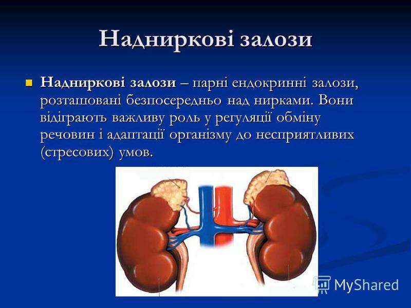 Надниркові залози Надниркові залози – парні ендокринні залози, розташовані безпосередньо над нирками. Вони відіграють важливу роль у регуляції обміну речовин і адаптації організму до несприятливих (стресових) умов. Надниркові залози – парні ендокринн