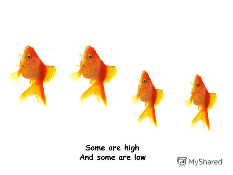 Some are high And some are low
