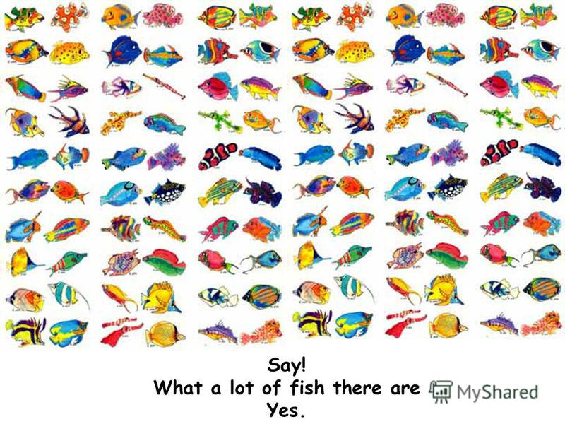 Say! What a lot of fish there are Yes.