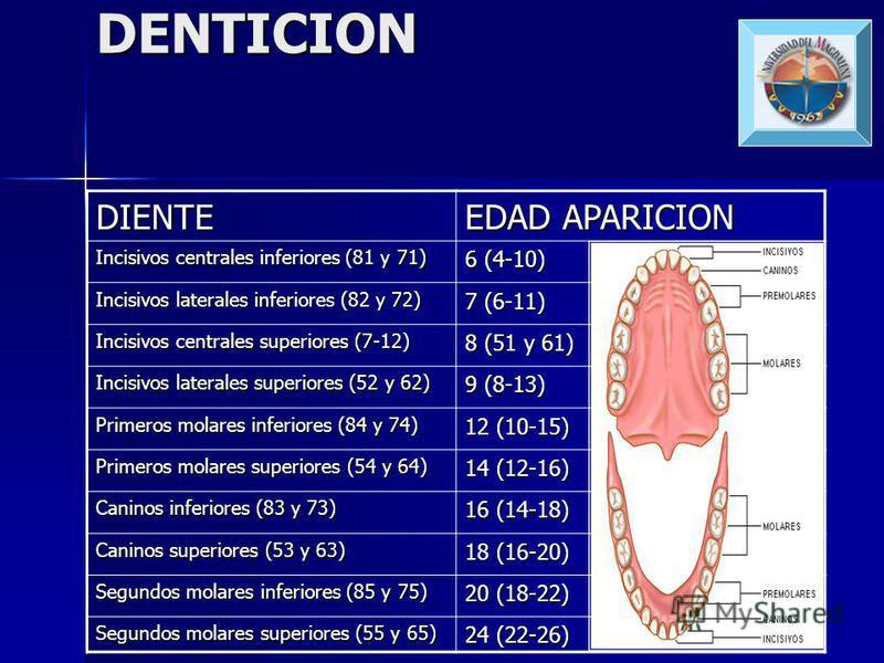 SENOS PARANASALES Etmoidal anterior y posterior: nacimiento Etmoidal anterior y posterior: nacimiento Proceso mastoideo: primer año-adolescencia Proceso mastoideo: primer año-adolescencia Seno frontal: 2 a 4 años-5 a 9 años Seno frontal: 2 a 4 años-5