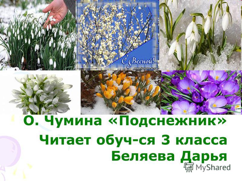 О. Чумина «Подснежник» Читает обуч-ся 3 класса Беляева Дарья