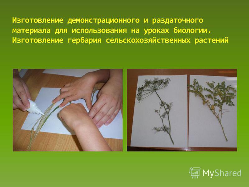 Изготовление демонстрационного и раздаточного материала для использования на уроках биологии. Изготовление гербария сельскохозяйственных растений