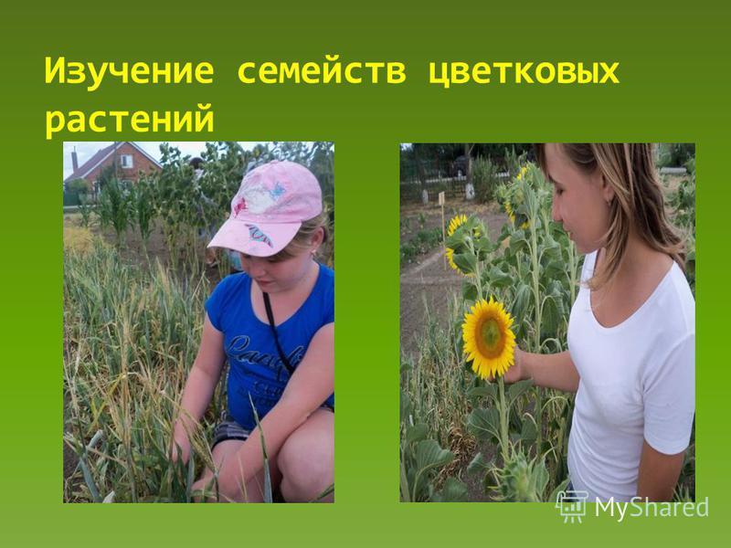 Изучение семейств цветковых растений