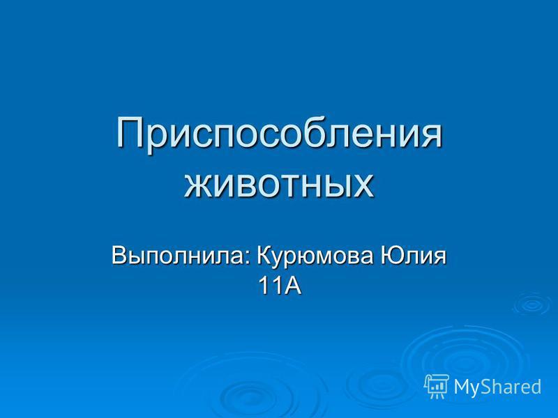Приспособления животных Выполнила: Курюмова Юлия 11А