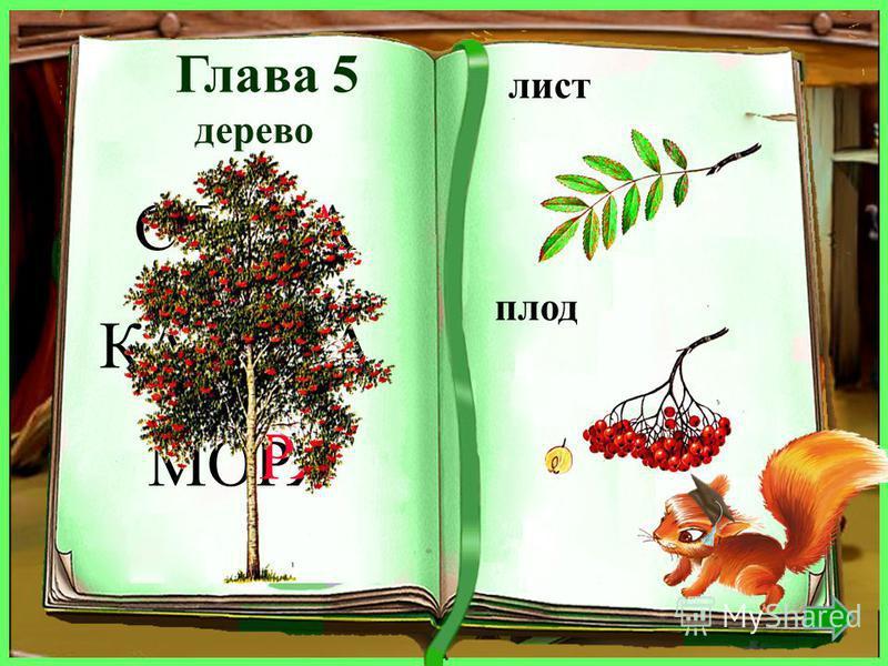 дерево лист плод липа липовый крылатка