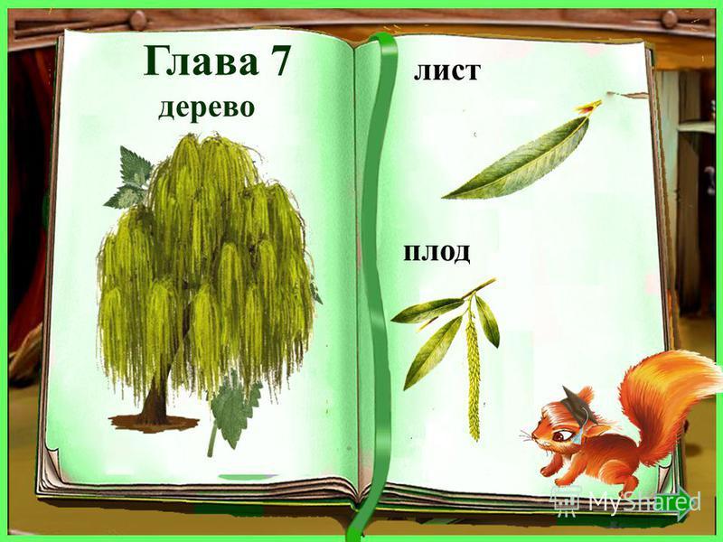 дерево лист плод ель хвоинка шишка
