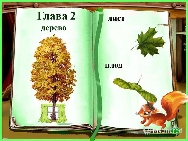 дерево лист плод дуб дубовый жёлудь