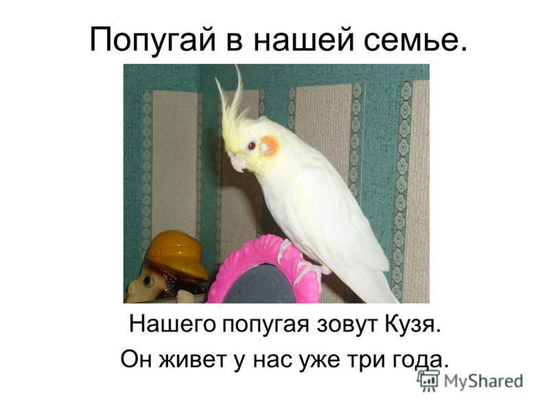 Попугай в нашей семье. Нашего попугая зовут Кузя. Он живет у нас уже три года.