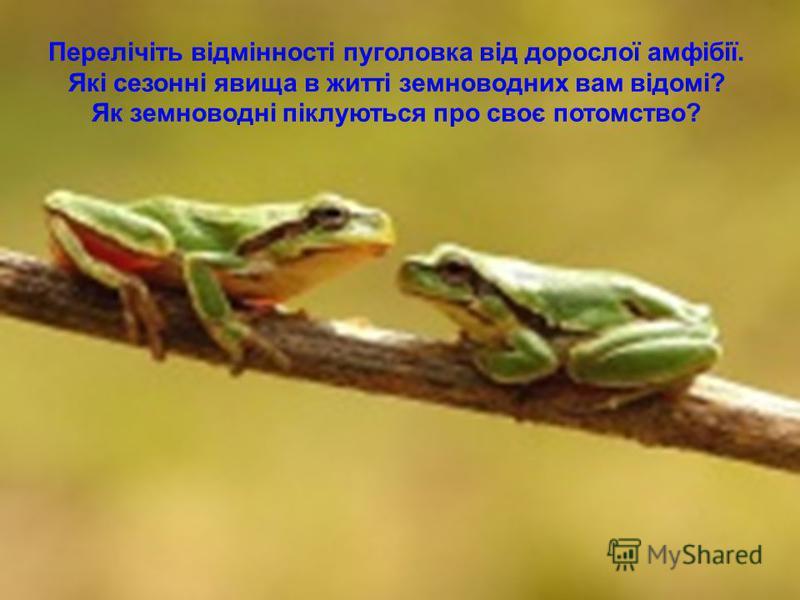 Перелічіть відмінності пуголовка від дорослої амфібії. Які сезонні явища в житті земноводних вам відомі? Як земноводні піклуються про своє потомство?