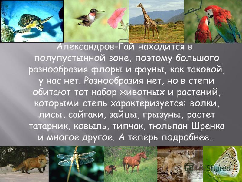Презентацию подготовила учитель начальных классов МОУ СОШ 2 Танкиева Маржан Чалкановна