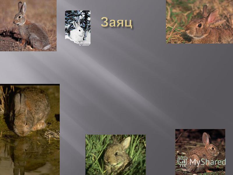 Александров-Гай находится в полупустынной зоне, поэтому большого разнообразия флоры и фауны, как таковой, у нас нет. Разнообразия нет, но в степи обитают тот набор животных и растений, которыми степь характеризуется: волки, лисы, сайгаки, зайцы, грыз