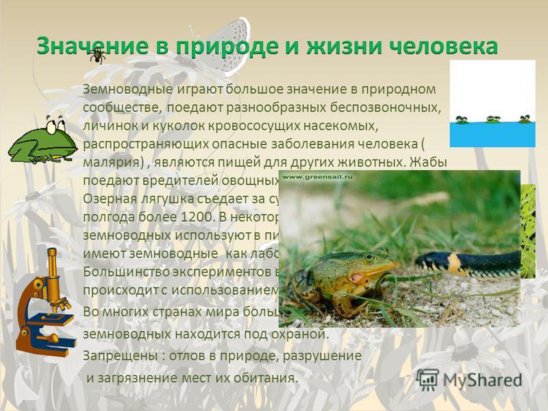 Земноводные играют большое значение в природном сообществе, поедают разнообразных беспозвоночных, личинок и куколок кровососущих насекомых, распространяющих опасные заболевания человека ( малярия), являются пищей для других животных. Жабы поедают вре