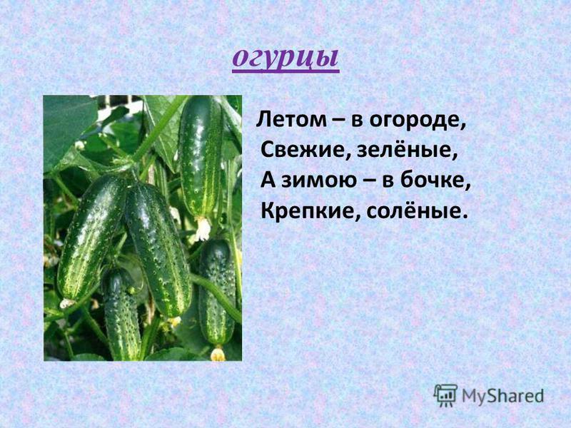 Летом – в огороде, Свежие, зелёные, А зимою – в бочке, Крепкие, солёные. огурцы