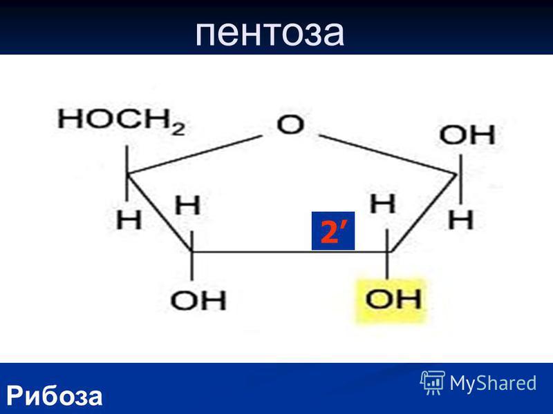 пентоза Рибоза 2