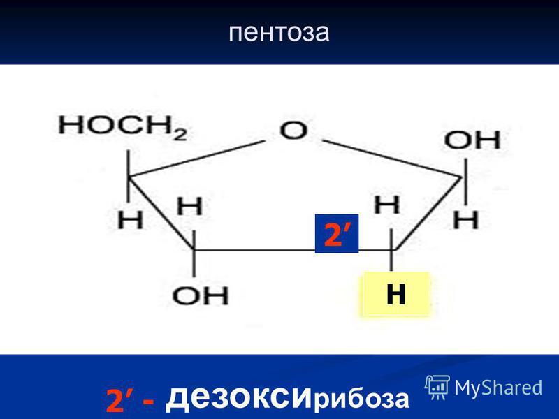 пентоза дезокси рибоза 2 H 2 -