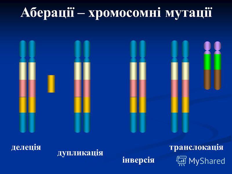 делеція дупликація інверсія транслокація Аберації – хромосомні мутації