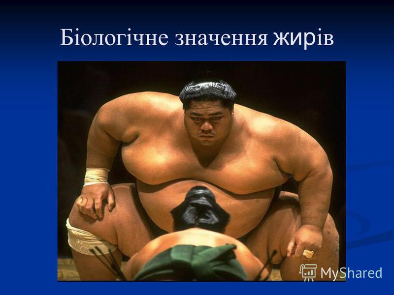 Біологічне значення жирів