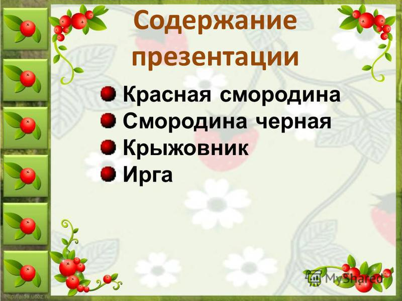 Содержание презентации Красная смородина Смородина черная Крыжовник Ирга