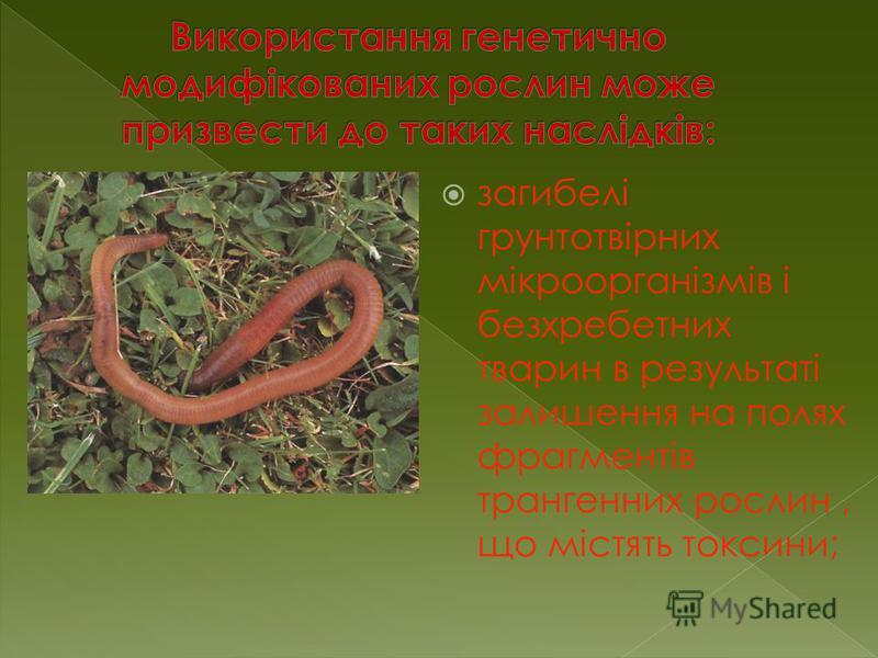 загибелі грунтотвірних мікроорганізмів і безхребетних тварин в результаті залишення на полях фрагментів трангенних рослин, що містять токсини;