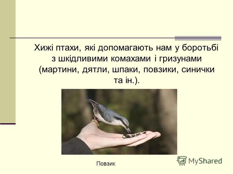 Хижі птахи, які допомагають нам у боротьбі з шкідливими комахами і гризунами (мартини, дятли, шпаки, повзики, синички та ін.). Повзик