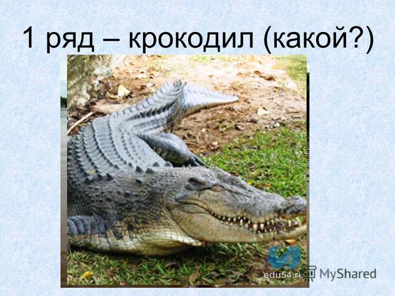1 ряд – крокодил (какой?)