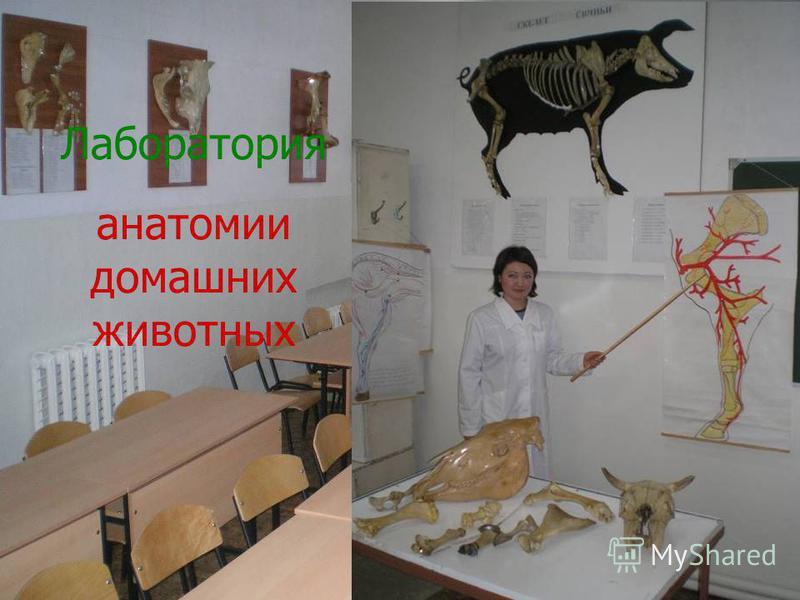 Лаборатория анатомии домашних животных