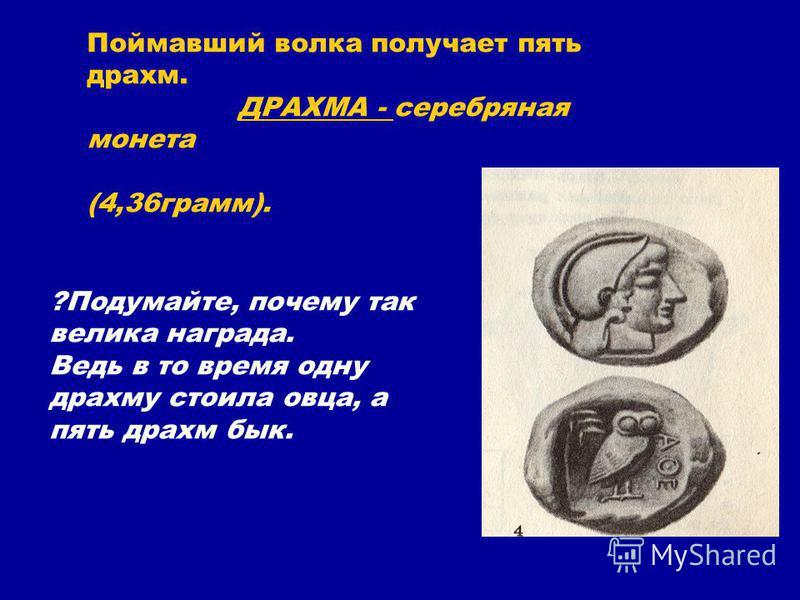 Поймавший волка получает пять драхм. ДРАХМА - серебряная монета (4,36 грамм). ?Подумайте, почему так велика награда. Ведь в то время одну драхму стоила овца, а пять драхм бык.