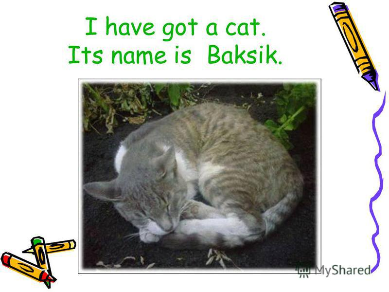 I have got a cat. Its name is Baksik.