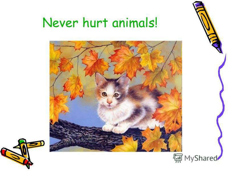 Never hurt animals!