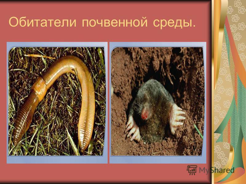 Обитатели почвенной среды.