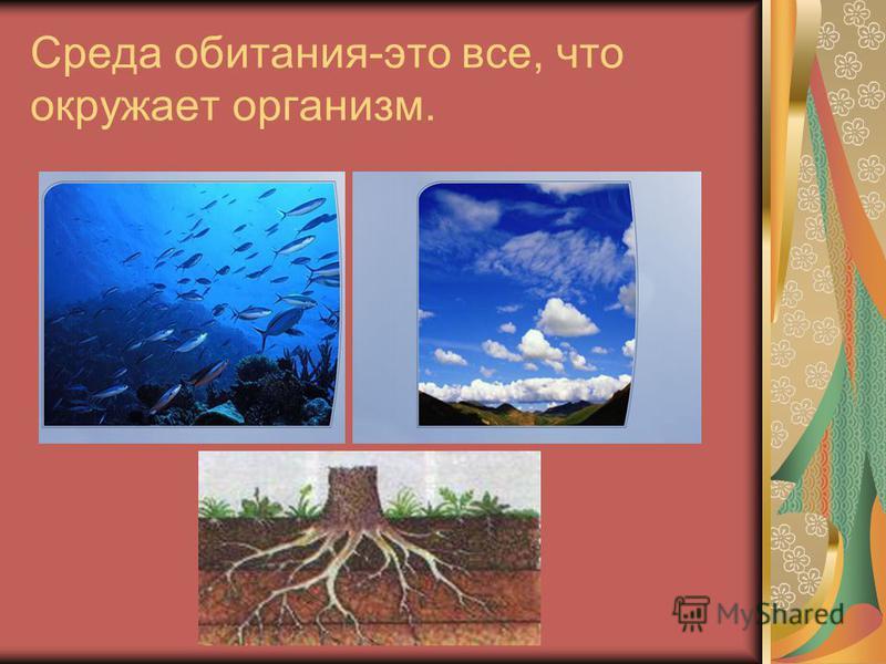 Среда обитания-это все, что окружает организм.
