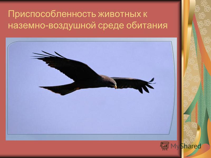 Приспособленность животных к наземно-воздушной среде обитания