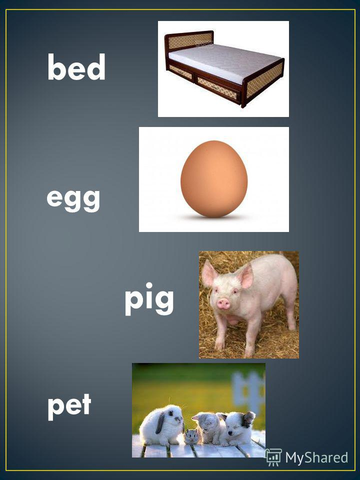 bed pet egg pig