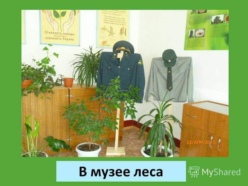 В музее леса