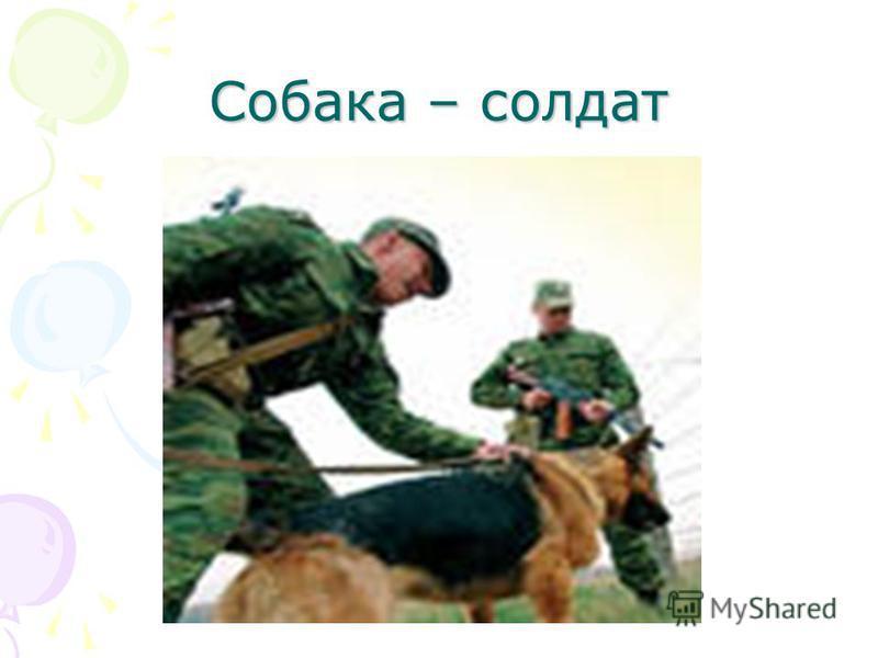 Собака – солдат