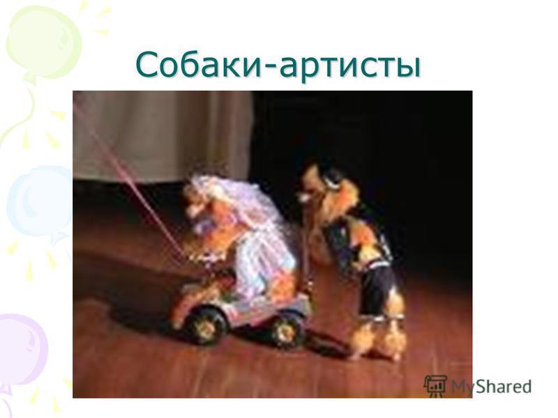 Собаки-артисты