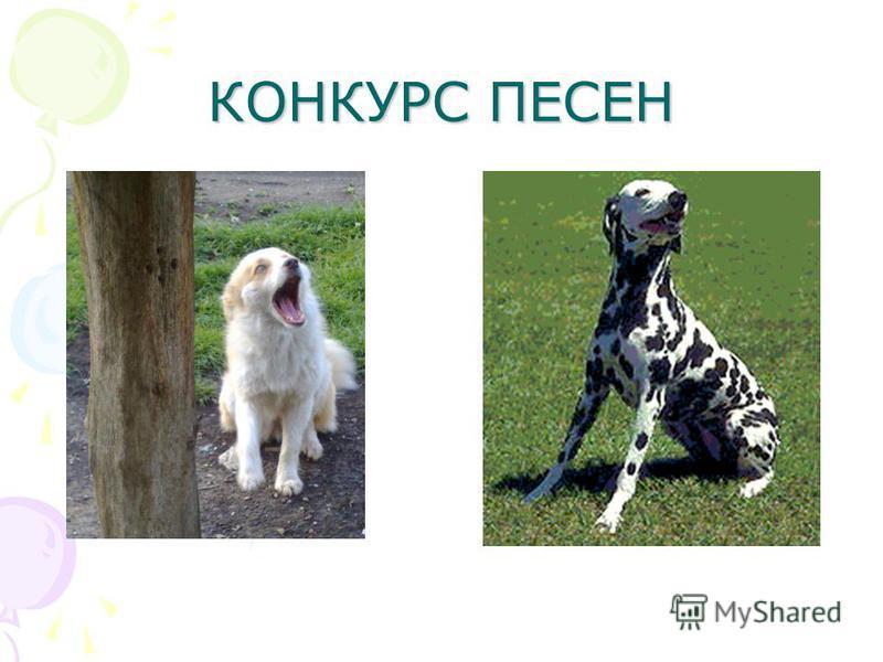 КОНКУРС ПЕСЕН