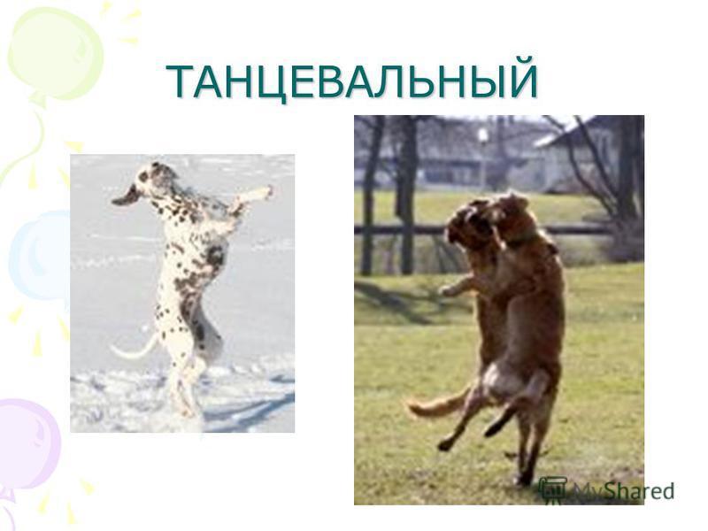ТАНЦЕВАЛЬНЫЙ