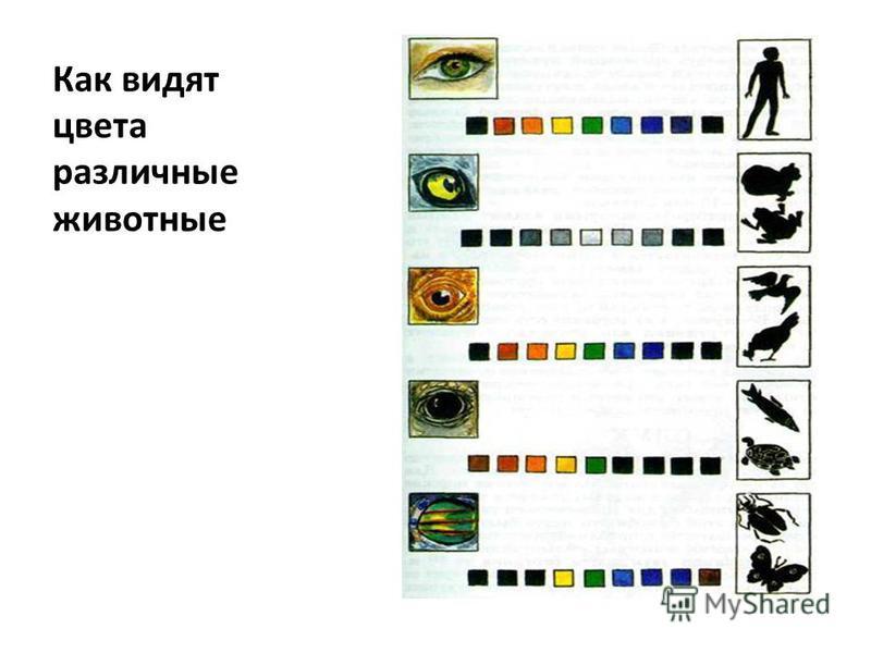 Как видят цвета различные животные