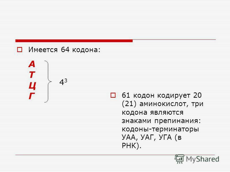 Имеется 64 кодона: 61 кодон кодирует 20 (21) аминокислот, три кодона являются знаками препинания: кодоны-терминаторы УАА, УАГ, УГА (в РНК). АТЦГАТЦГ 4343