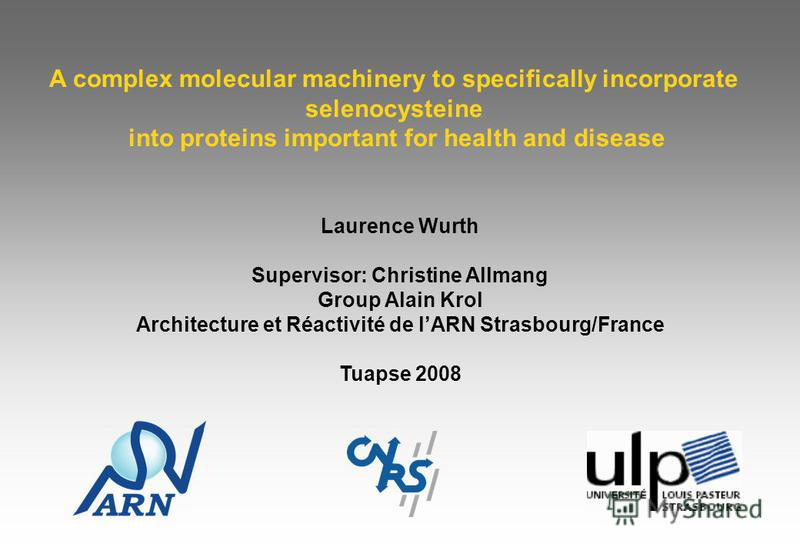A complex molecular machinery to specifically incorporate selenocysteine into proteins important for health and disease Laurence Wurth Supervisor: Christine Allmang Group Alain Krol Architecture et Réactivité de lARN Strasbourg/France Tuapse 2008