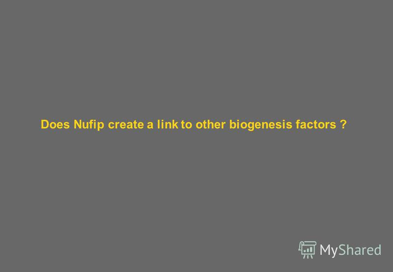 Does Nufip create a link to other biogenesis factors ?