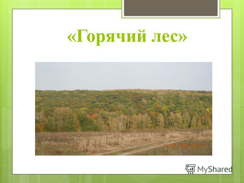 «Горячий лес»